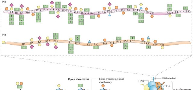 Histone acetylation: molecular mnemonics on the chromatin